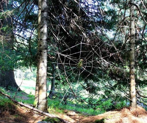 Паутина и паук таинственного леса, команда «Всплеск»